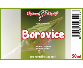 Borovice - tinktura z pupenů (gemmoterapie) 50 ml
