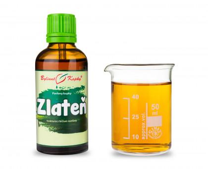 Zlateň (chryzantéma) - bylinné kapky (tinktura) 50 ml